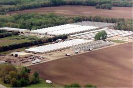 1/2 million square feet of greenhouse space