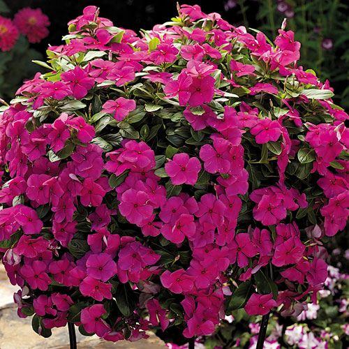 Shade Garden Plants Drought Tolerant
